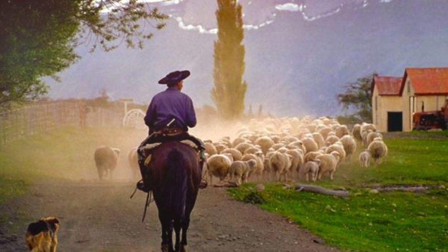 Argentina - Nibepo Aike - Estancia - Sheep Herding