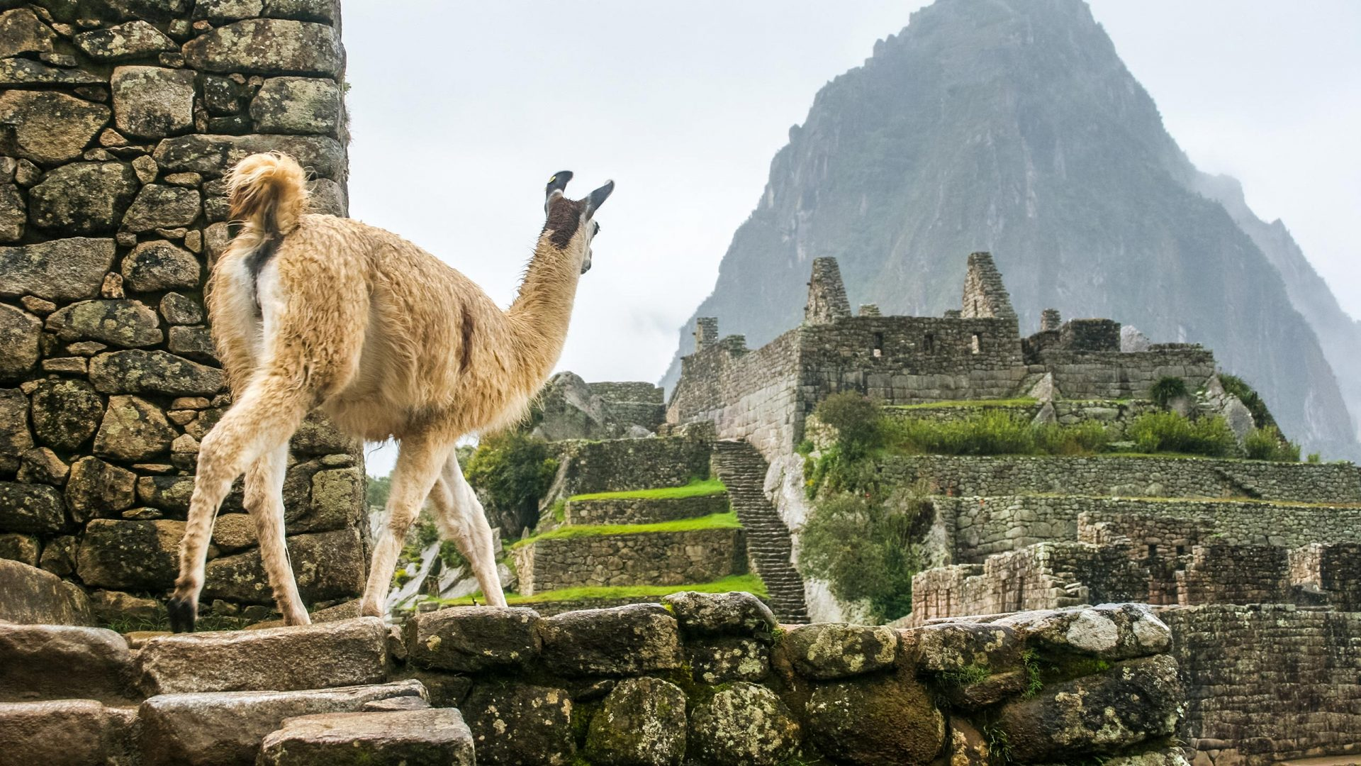 Machu Picchu Amp Galapagos Islands Tour Two Of South