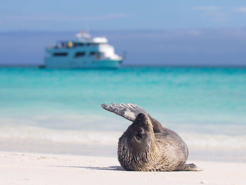 Peru to Galapagos boat