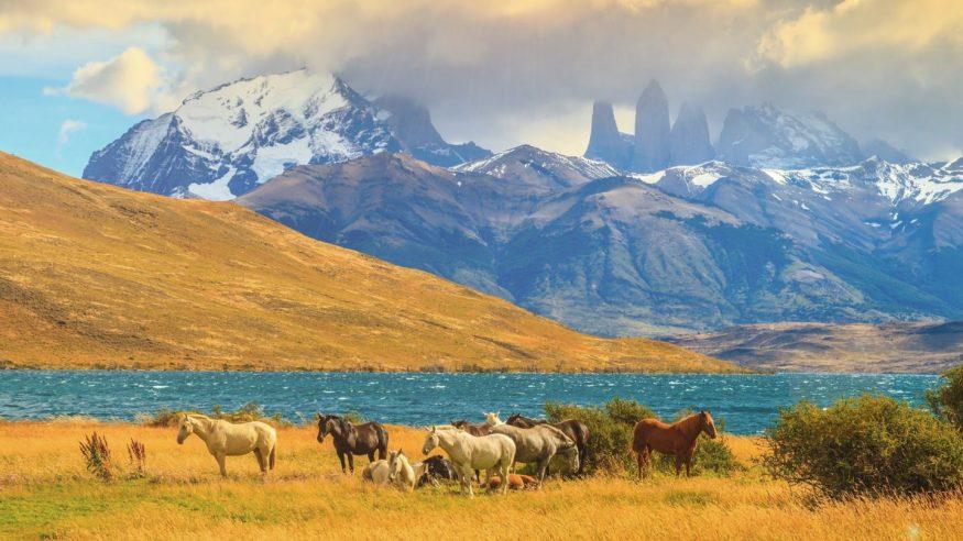 Patagonia - Torres del Paine - Horses